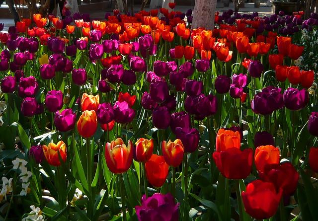 Springtime! 春天! (2)