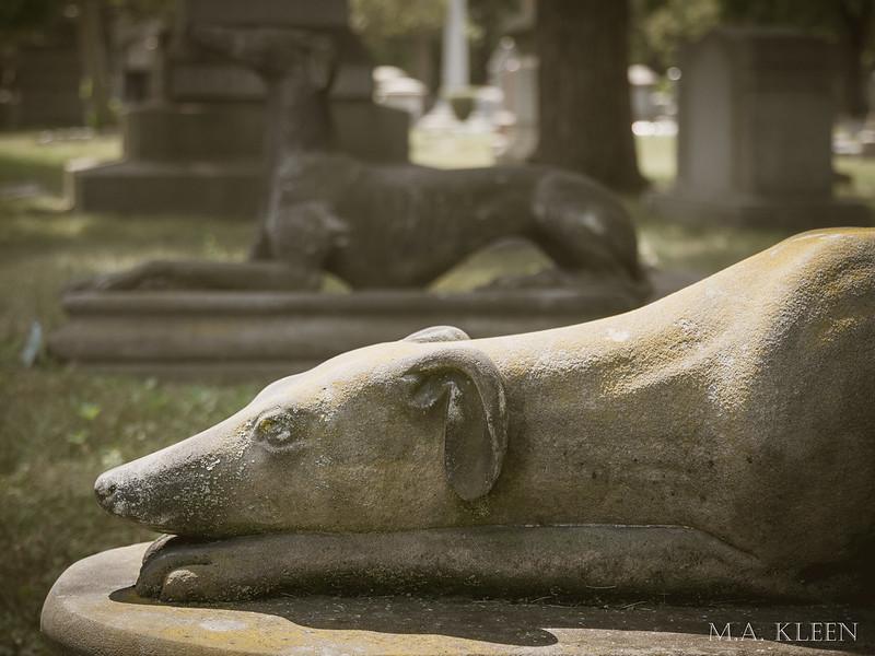 Stein Greyhounds