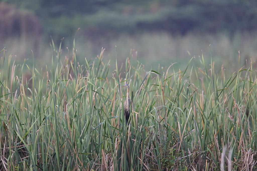 Bundala NP Sri Lanka