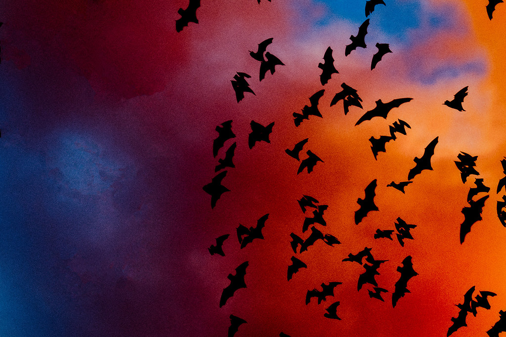 flying bats in Silhouette