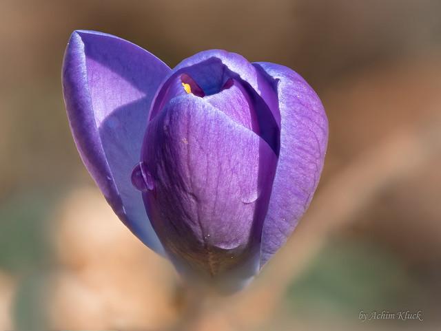 Die ersten Frühlingsboten zeigen sich am Waldrand