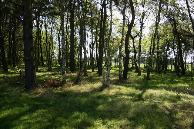 Reres Wood near Leuchars