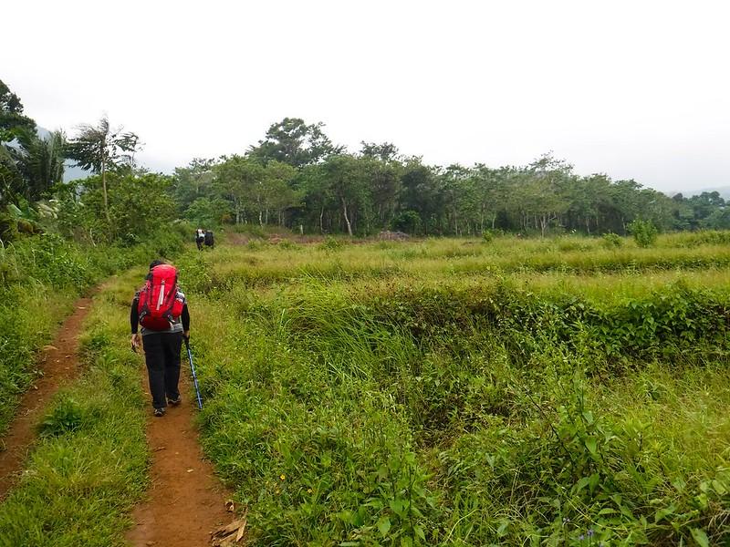 Approaching the treeline