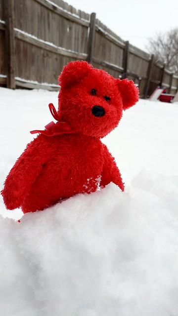 Sizzle having fun in the snow.