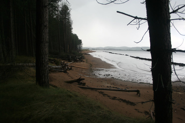 The Firth of Tay at Tentsmuir Forest