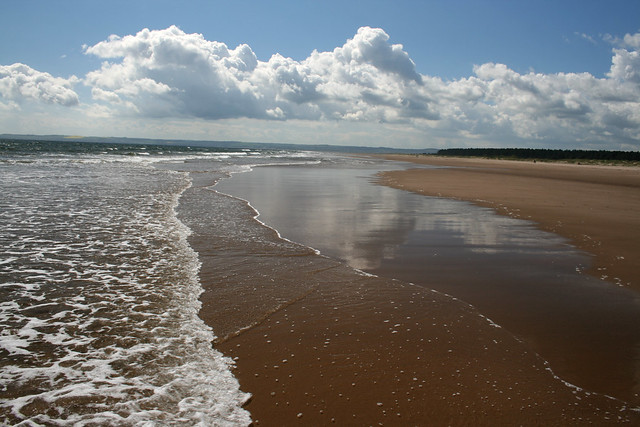The coast at Tentsmuir Forest