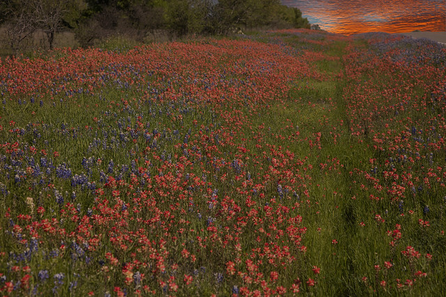 Llano Texas Wildflowers At Sunset 9