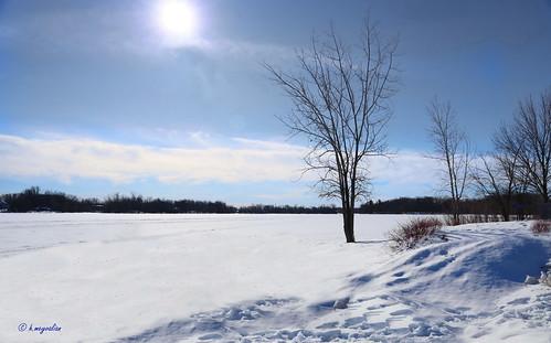 Il Parco in una cornice di ghiaccio  -  Parc de la Rivière-des-Mille-Îles