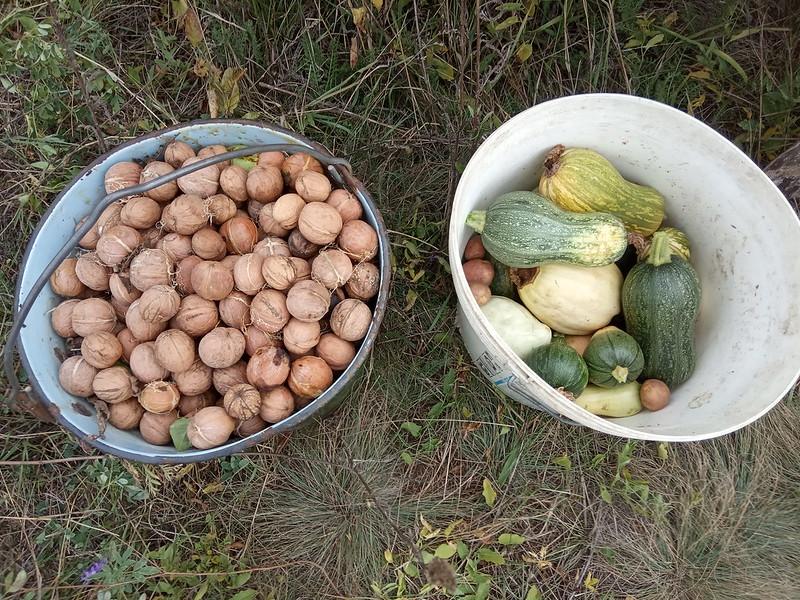 Нижняя Навадвипа осень 2019 - урожай