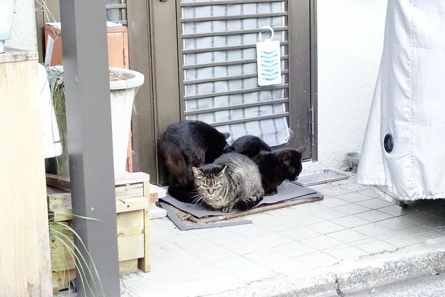 Today's Cat@2020-02-06