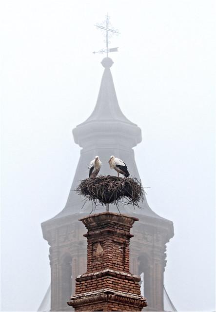 Cigüeñas en la niebla