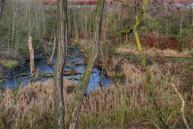 Urwald/Sumpf im LaPaDu