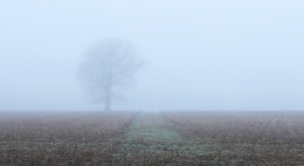 Tree in the mist Bepton