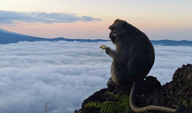 mister monkey above the sky
