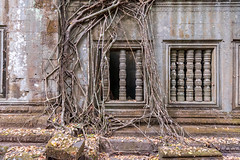 Roots and windows