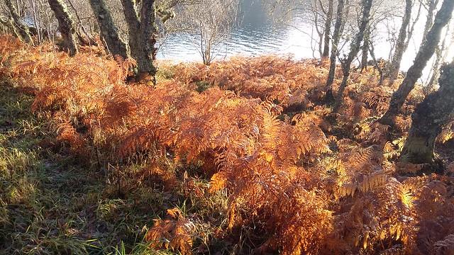 Autumn Colours, Loch Duntelchaig, Nov 2019