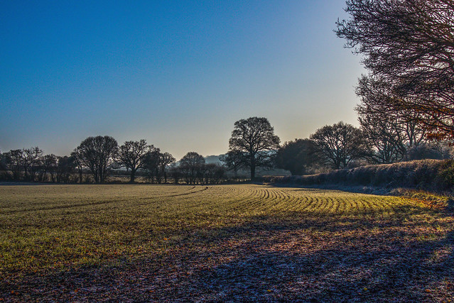 A frosty Hampshire morning