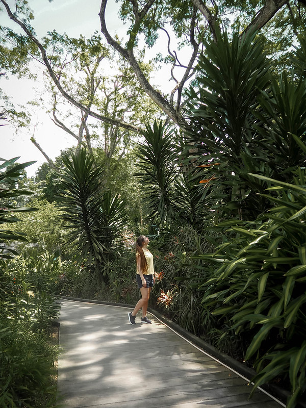 singapore_botanic (2)