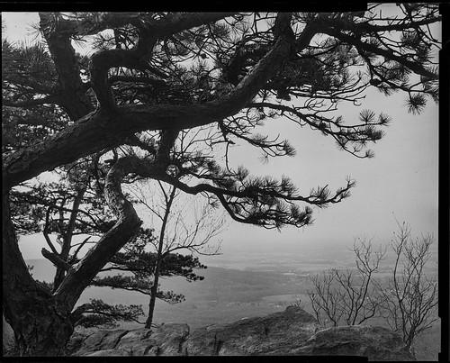 sugarloafmountain landscape aristaedu100 maryland 4x5 iso100 graflexcrowngraphic bw blackandwhite film largeformat dickerson unitedstatesofamerica