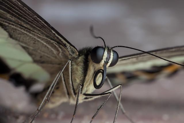 Attractive Barfly, Pt. 6 - _TNY_3812