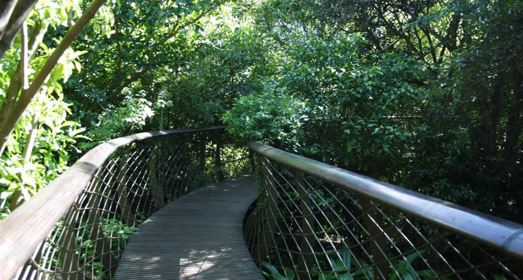 Kirstenbosch National Botanical Garden | Mooistestedentrips.nl