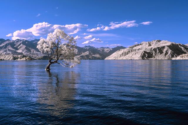 mmmm - a tree in a lake?