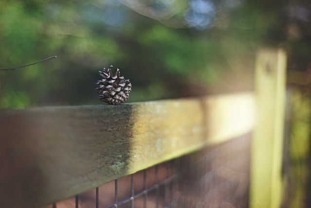 Happy Fence Friday... #HappyFenceFriday #HFF