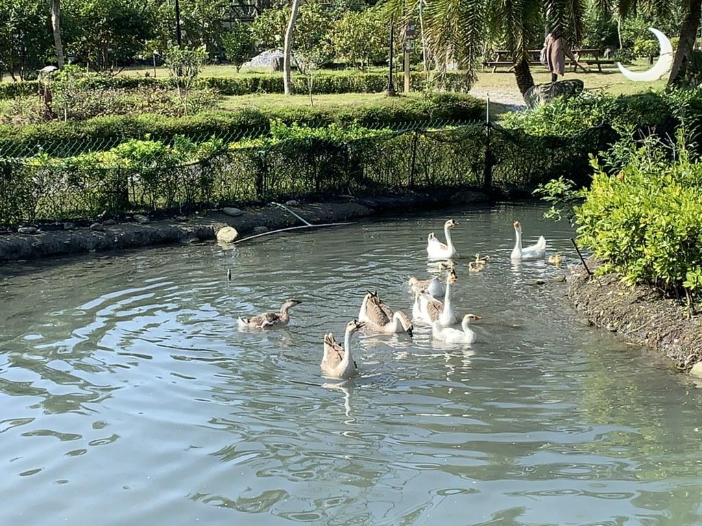 20200201_花蓮瑞穗棕櫚湖民宿 (179)