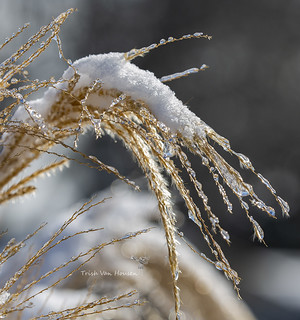 Winter | by Dances With Tripods / Trish Van Housen