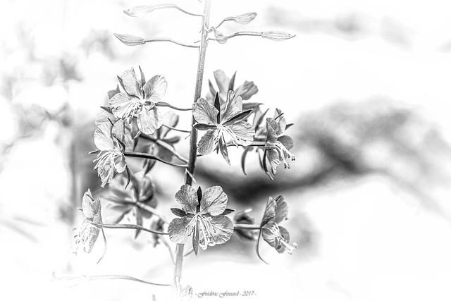 Esquisse Florale