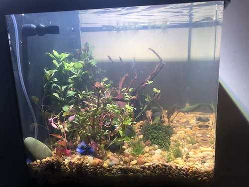 Planted tank | by kbond395