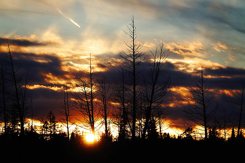 sunset silhouette trees clouds dramatic