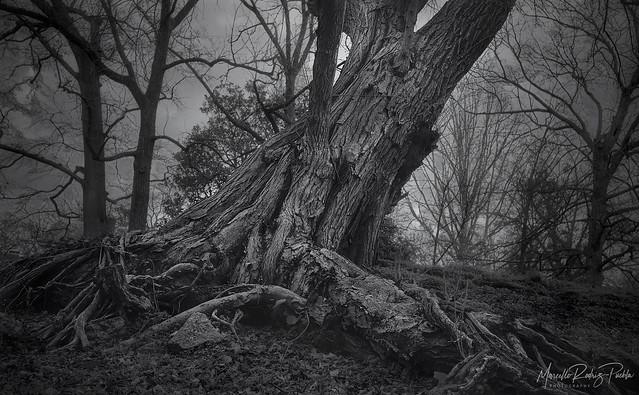 Mistic Tree