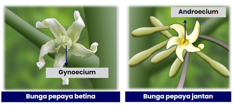 Reproduksi Seksual Pada Tumbuhan Kelas Pintar