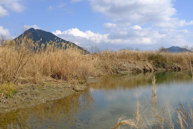 Susuki grass, Mikamiyama (三上山), and Bodaijisan (菩提寺山)