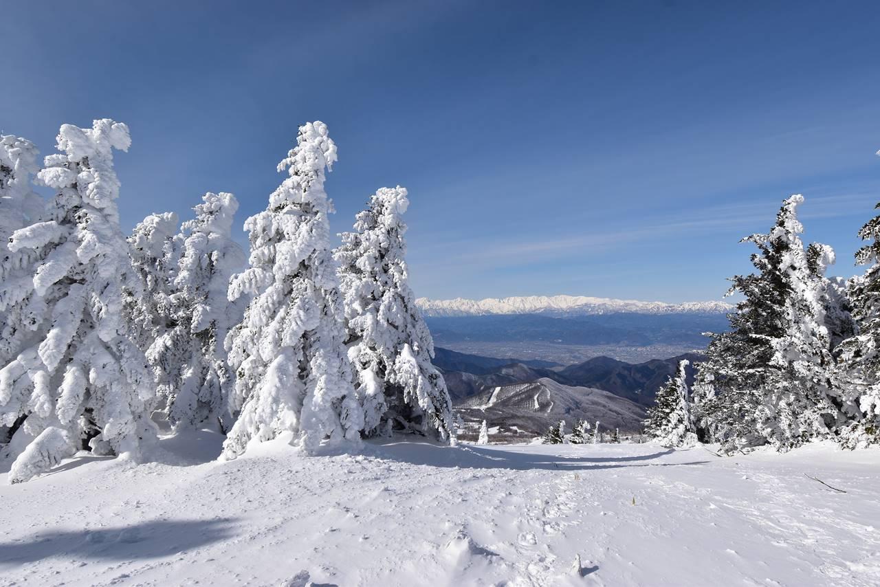 冬の根子岳 樹氷越しの北アルプス