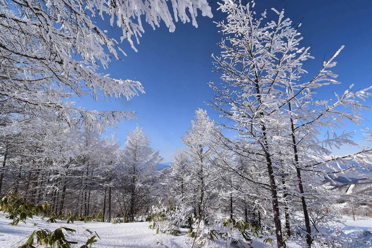 根子岳の霧氷風景