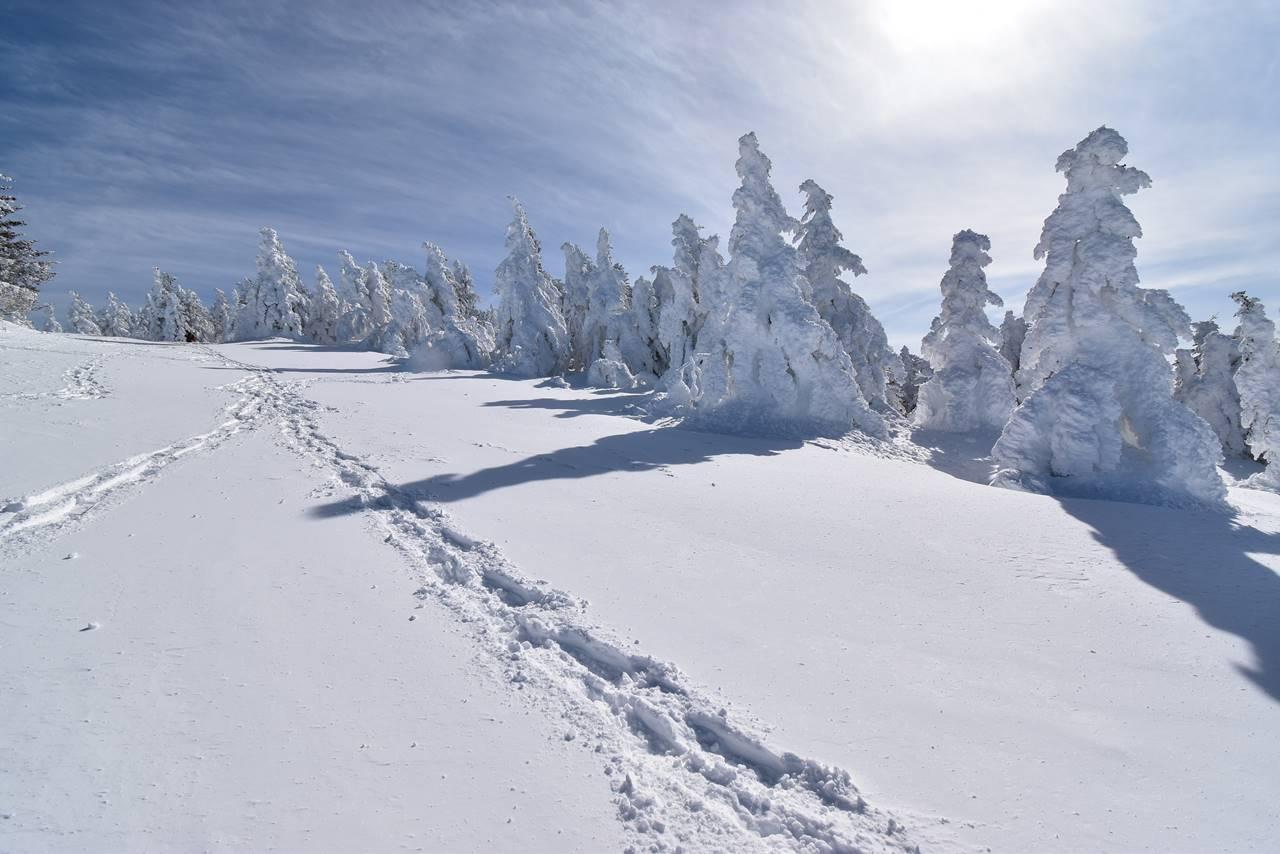 冬の根子岳の樹氷風景