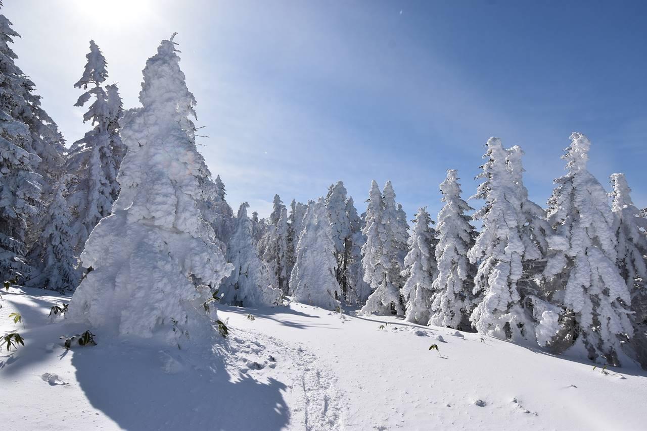 根子岳 樹氷の森