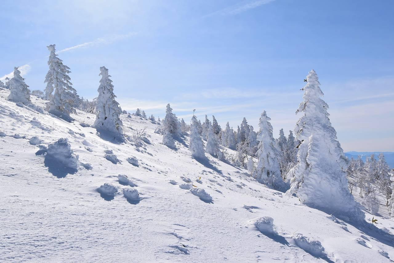 根子岳の樹氷風景