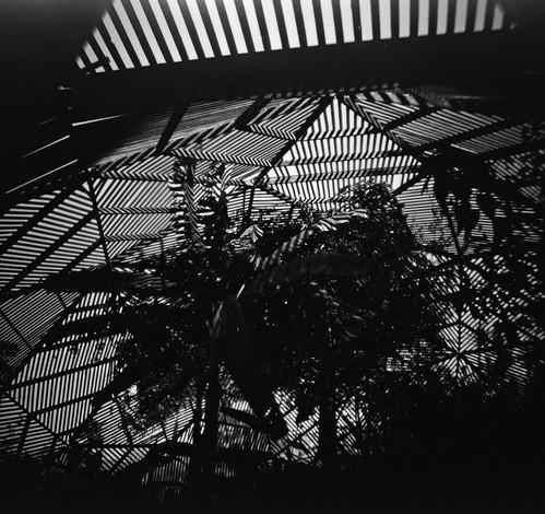 UCR Botanic Gardens (0005)
