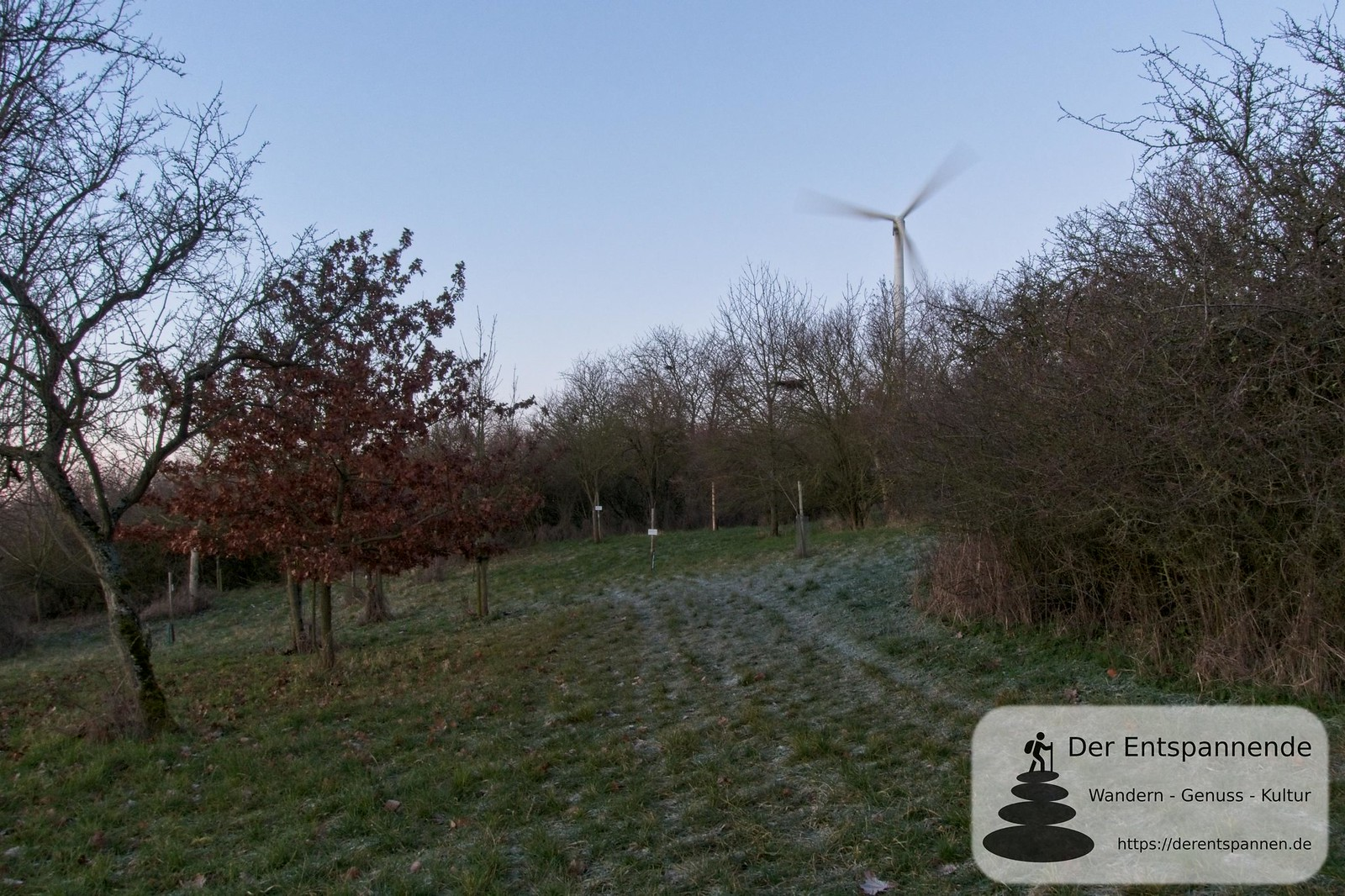 Jubiläumswald im Selzer Gottesgarten (Januar am Selzbogen)