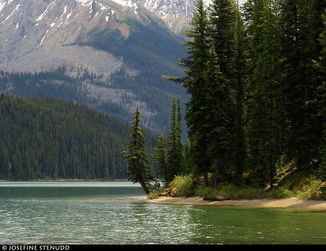 20180616_17k Trees on small beach by Maligne Lake, Jasper National Park, Alberta, Canada