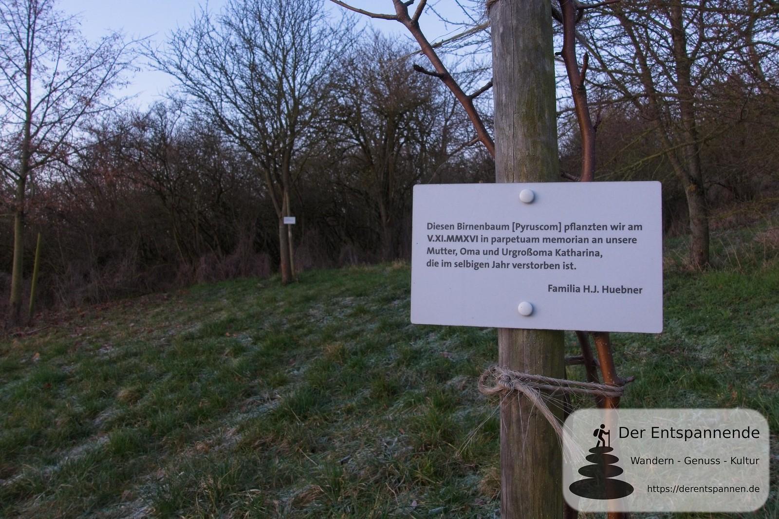 Birnenbaum im Selzer Jubiläumswald (Januar am Selzbogen)