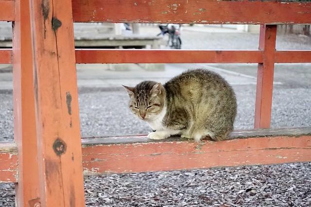 Today's Cat@2020-02-08