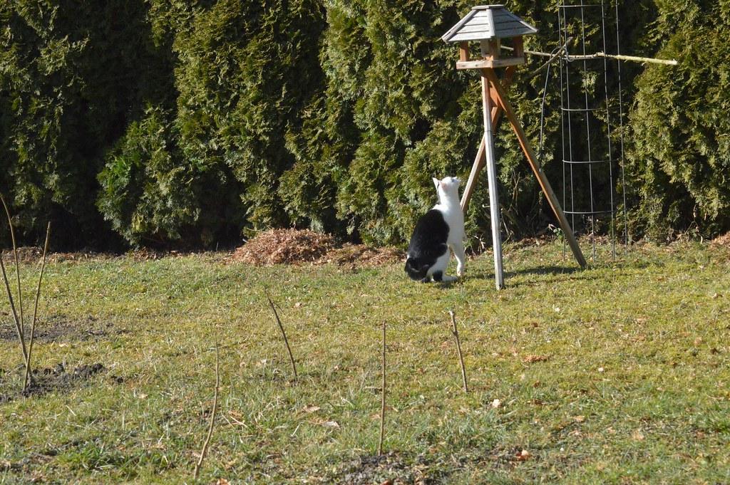 DSC_0118 kein Vogelschützer