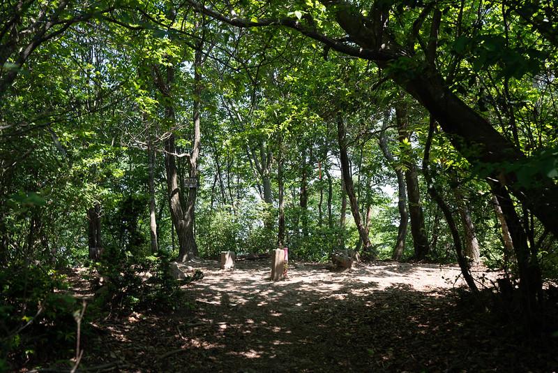 鶏冠山の樹林帯