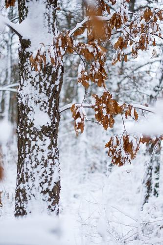 landscape ilfov românia colors nature outdoor m42 canon manuallens