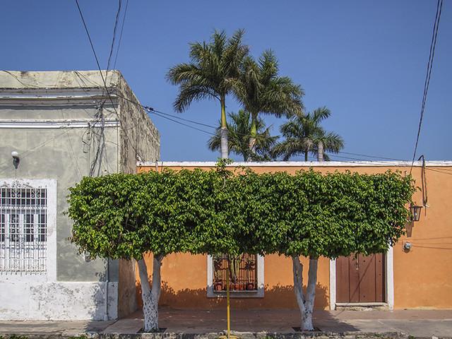 Orange House and Trees