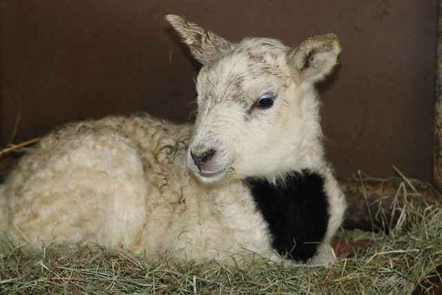 New  Life 1  Day  Old ,  Born 4-2-2020